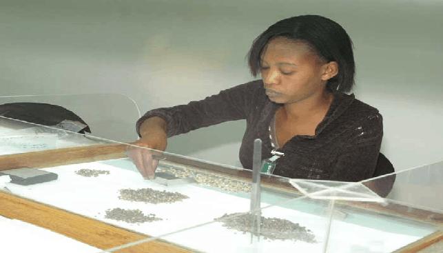 ממיינת יהלומי גלם זימבבואה